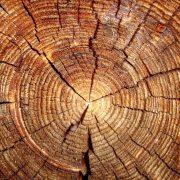 روشهای اصلاح چوب ترموود